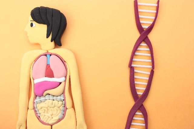 認知症検査の血液検査と遺伝子検査についての解説
