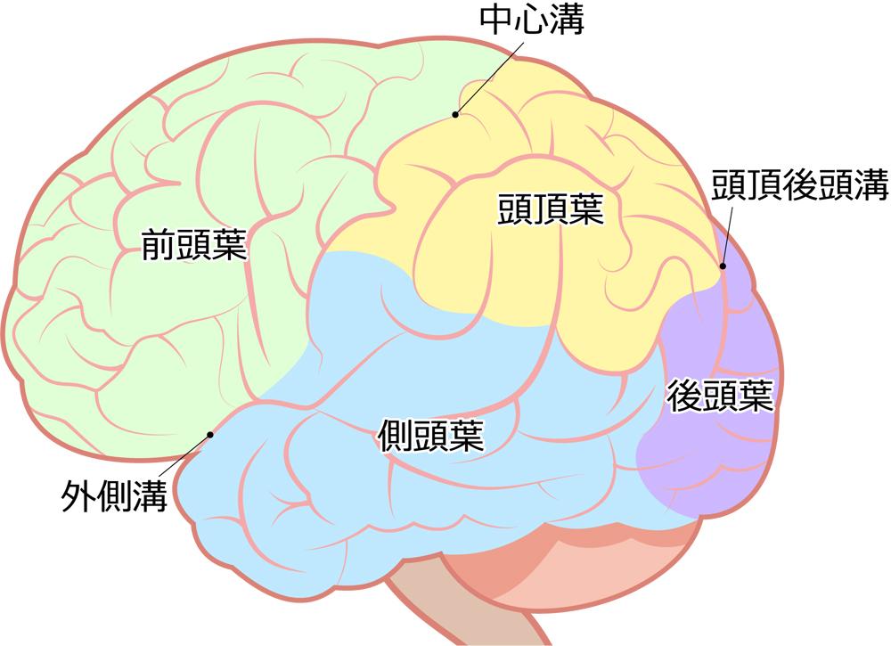 前頭側頭型認知症ってどんな症状があるの?