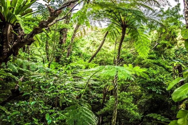 幻覚(ジャングル)が見えると訴える認知症の人への対応例